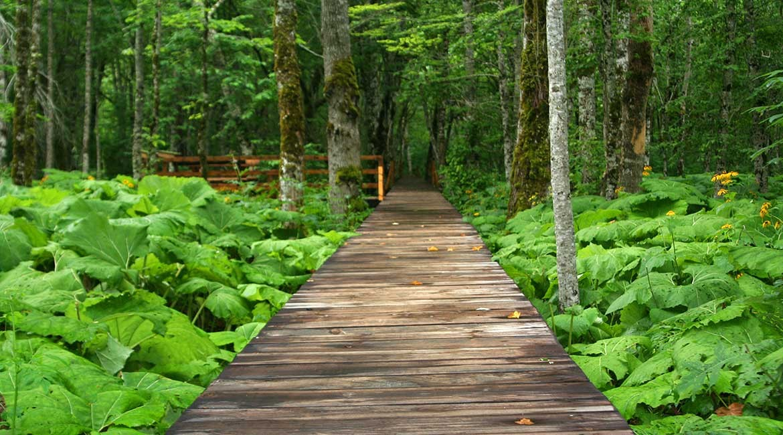Biogradska Gora national park