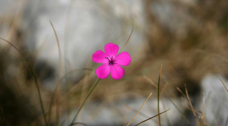 Flora of Montenegro.