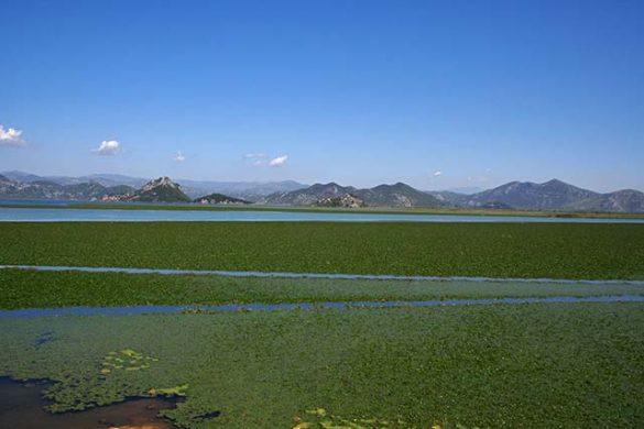 Skadarsko Jezero nationaal park